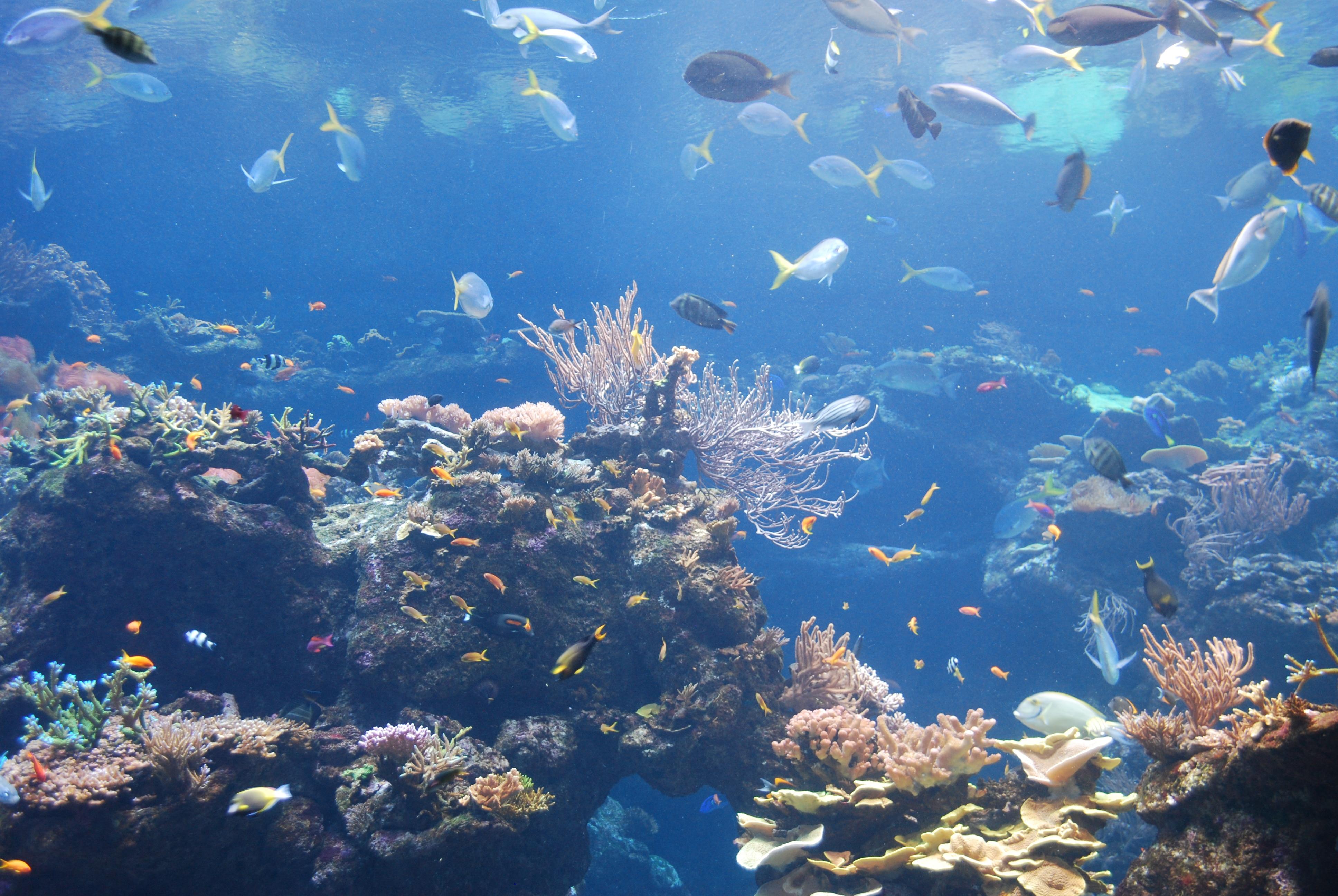 The aquarium at the California Academy of Sciences